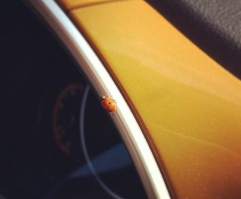 Surprise visit #ladybug #bettle #pictureoftheday #yellow #red #bug